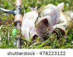 fishing catch on the grass and... | Shutterstock . vector #478223122