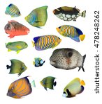 Marine Fish  Tropical Fish ...