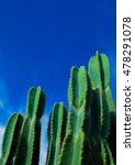 Cactus And Blue Sky View.