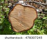 a cross section of birch trunk... | Shutterstock . vector #478307245