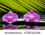 Two Orchid With Palm And Stone...