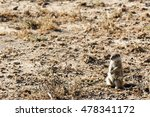 Small photo of Ground Squirrel YES Sir - Mountain Zebra National Park is a national park in the Eastern Cape province of South Africa