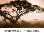 misty foggy morning on african... | Shutterstock . vector #478386052