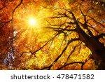 autumn sun shining warmly...   Shutterstock . vector #478471582