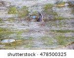 wood texture. moss | Shutterstock . vector #478500325