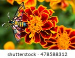 Colorful Butterfly On French...