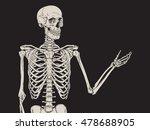 Human Skeleton Posing Isolated...
