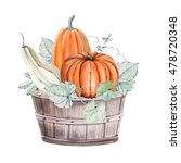 Pumpkins. Hand Drawn Watercolor ...