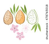 almond. vector illustration ... | Shutterstock .eps vector #478765018