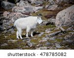 wild mountain goat on mount... | Shutterstock . vector #478785082