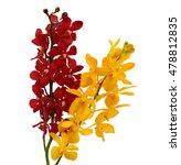 beautiful vanda orchid flowers  ... | Shutterstock . vector #478812835