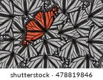 A Monarch Butterfly Edited In...