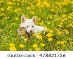 Stock photo puppy lying with kitten together on the lawn of dandelions 478821736