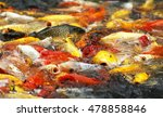 group of koi or fancy carp fish ... | Shutterstock . vector #478858846