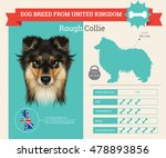 Rough Collie Dog Breed Vector...