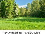 green grass and trees in the... | Shutterstock . vector #478904296