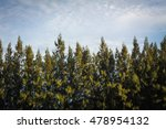 beautiful blue sky and top of...   Shutterstock . vector #478954132