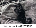 Cute Little Black Kitten Lays...