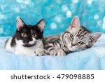Stock photo cute kitten 479098885