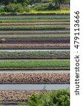 birds eye view of the vegetable ... | Shutterstock . vector #479113666