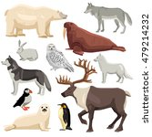 different flat polar animals... | Shutterstock .eps vector #479214232
