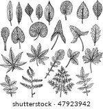 floral and leaf vector | Shutterstock .eps vector #47923942