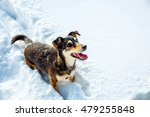 Dog In Mountain Winter...