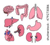 doodle icons. human organs.... | Shutterstock .eps vector #479273086