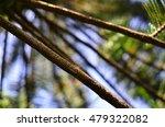 branch | Shutterstock . vector #479322082