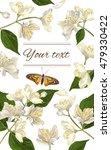 vector jasmine flowers vertical ... | Shutterstock .eps vector #479330422