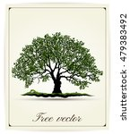 beautiful tree on a white... | Shutterstock .eps vector #479383492