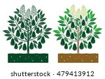 avocado tree with leaves and... | Shutterstock .eps vector #479413912