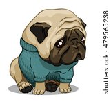 sad pug in blue sweater | Shutterstock .eps vector #479565238