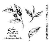 vector set of tea leaves. ink... | Shutterstock .eps vector #479577316