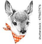 cute deer. pencil sketch of...   Shutterstock . vector #479607976