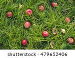 Red Apples On The Grass Under...