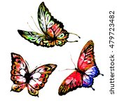 butterfly watercolor  isolated... | Shutterstock . vector #479723482