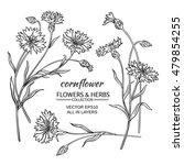 Cornflower Vector Set On  Whit...