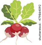 fresh radishes. radish on white ... | Shutterstock .eps vector #479864092