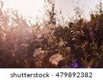 meadow background   Shutterstock . vector #479892382