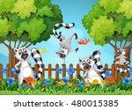 Four Lemurs Playing In Garden...