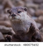 otter playing in the water | Shutterstock . vector #480075652