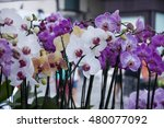 beautiful pink and white orchid ...   Shutterstock . vector #480077092