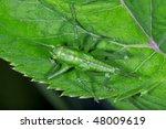 the grasshopper | Shutterstock . vector #48009619