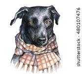 cute puppy wearing checkered... | Shutterstock . vector #480107476