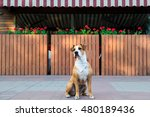 Patient Dog In Bandana Waiting...