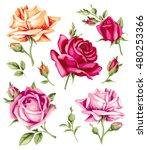 decorative vintage roses.... | Shutterstock .eps vector #480253366