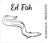 Live Eel Fish  Sketch Style...