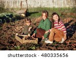 the children dig up the potato... | Shutterstock . vector #480335656