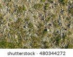 seamless balding grass texture... | Shutterstock . vector #480344272